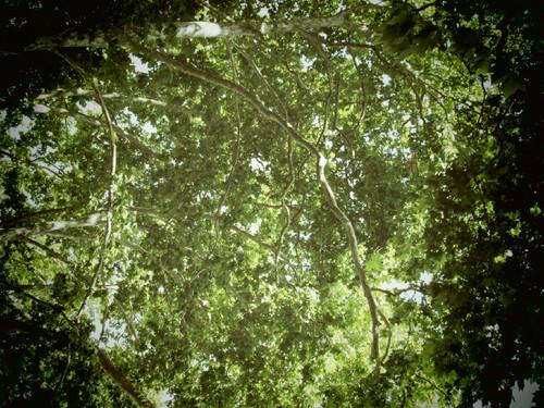 Céu verde.JPG