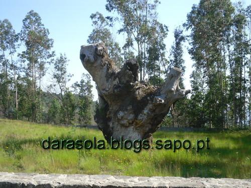 caminho_romano_arouca_04.JPG