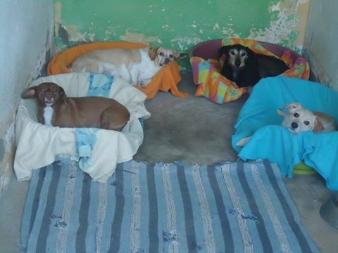 Fotos Cusco, Nina ,Lima e Quiche.jpg