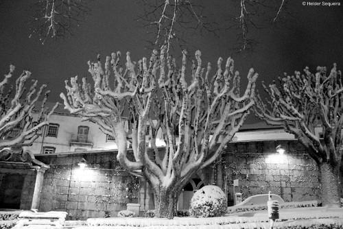Árvores e nevão - HS.jpg