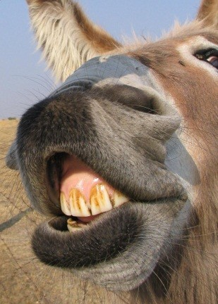 burro 3