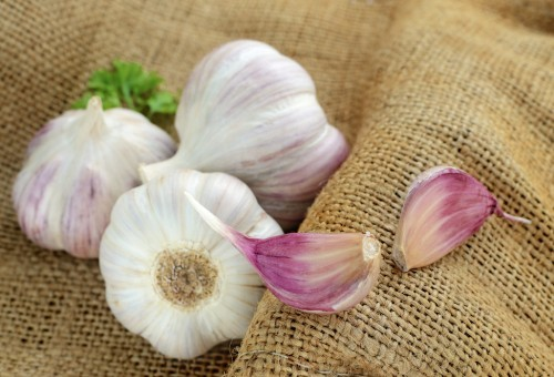 FOTO2_HORTA_alhoemvasos_dona-flor-nutrientes-para-