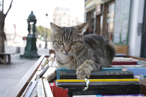 outdoor-bookstore-cat.jpg