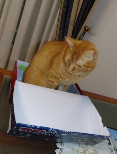 gato-na-caixa.JPG