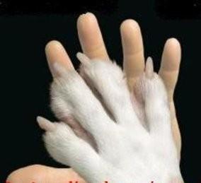 amar-os-animais-1.jpg