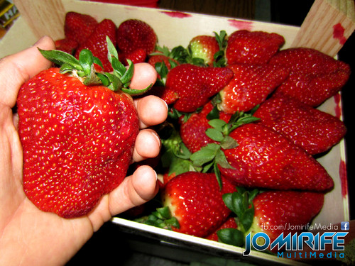 Morangos muito grandes [en] Very big strawberries
