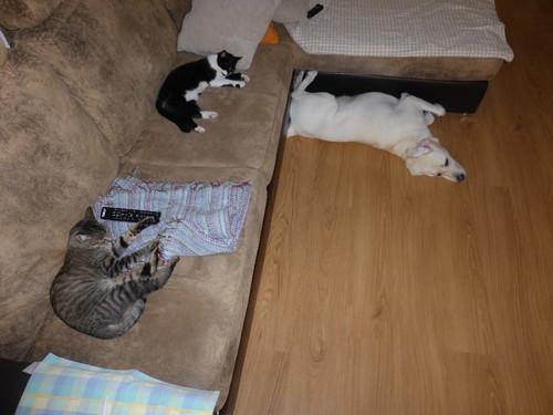 Três animais.JPG