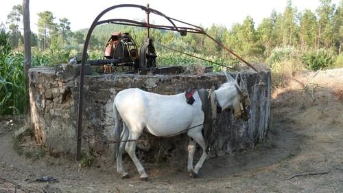 burro-nora.jpg