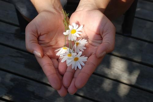 flower-22656_640.jpg