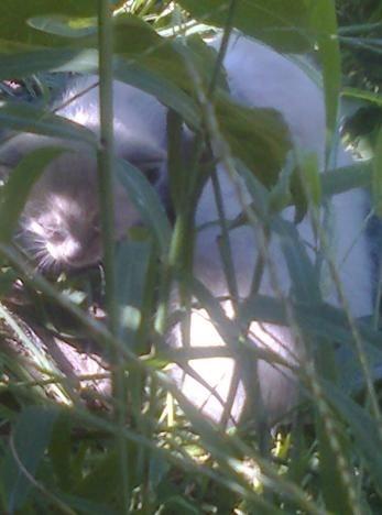 gatos-em-quintal-materno_VC-Agosto 2013_1.jpg