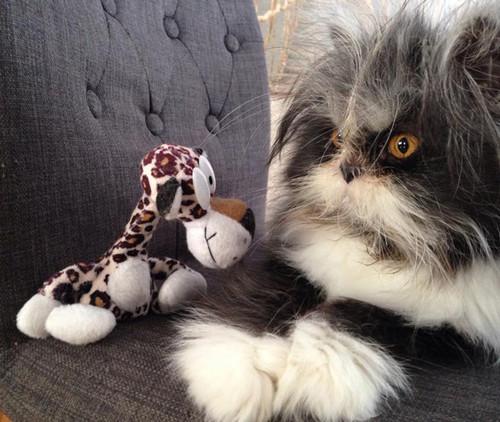 hairy-cat-death-stare-atchoum-21.jpg