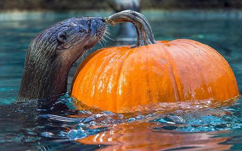 potd-pumpkin_3066840k.jpg