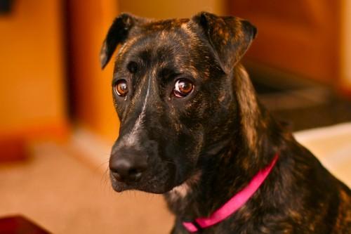 Dog-LoraKirchner.jpg