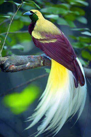 ave do paraíso 1.jpg