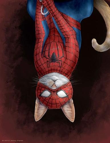 spidercat.jpg