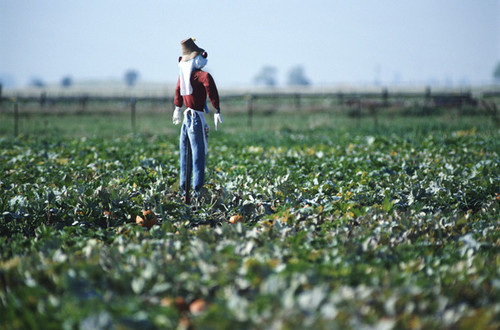 Agricultura PAC.jpg