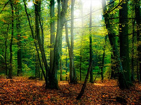 floresta160114.jpg