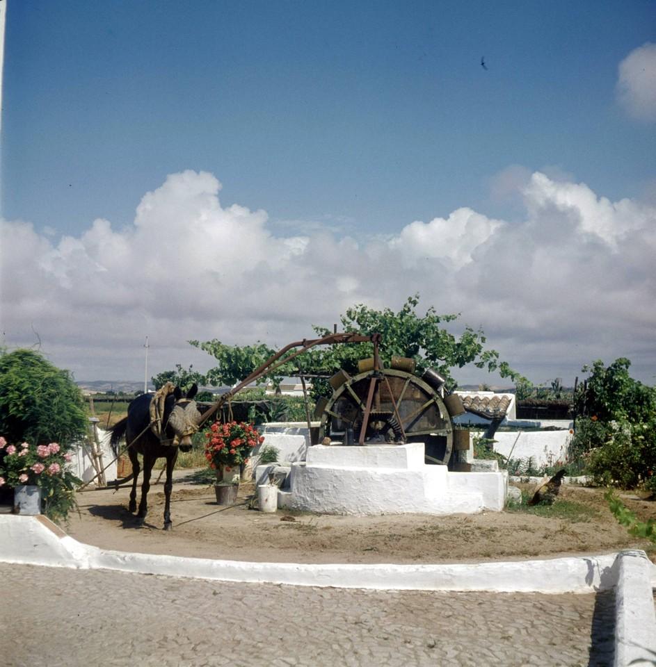 À nora, Algarve (A. Pastor, 198...)