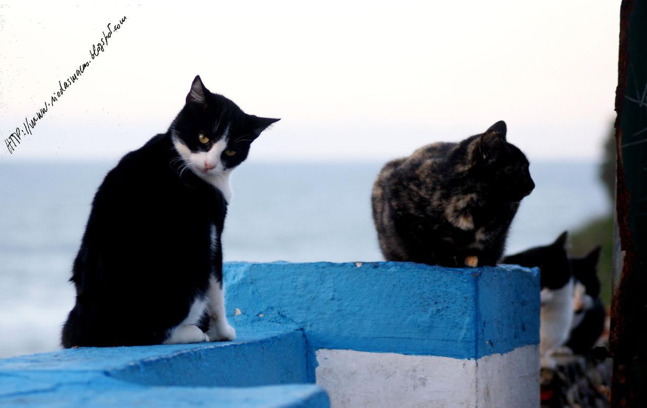 GatosmPraiadasMaças05122014blog.jpg