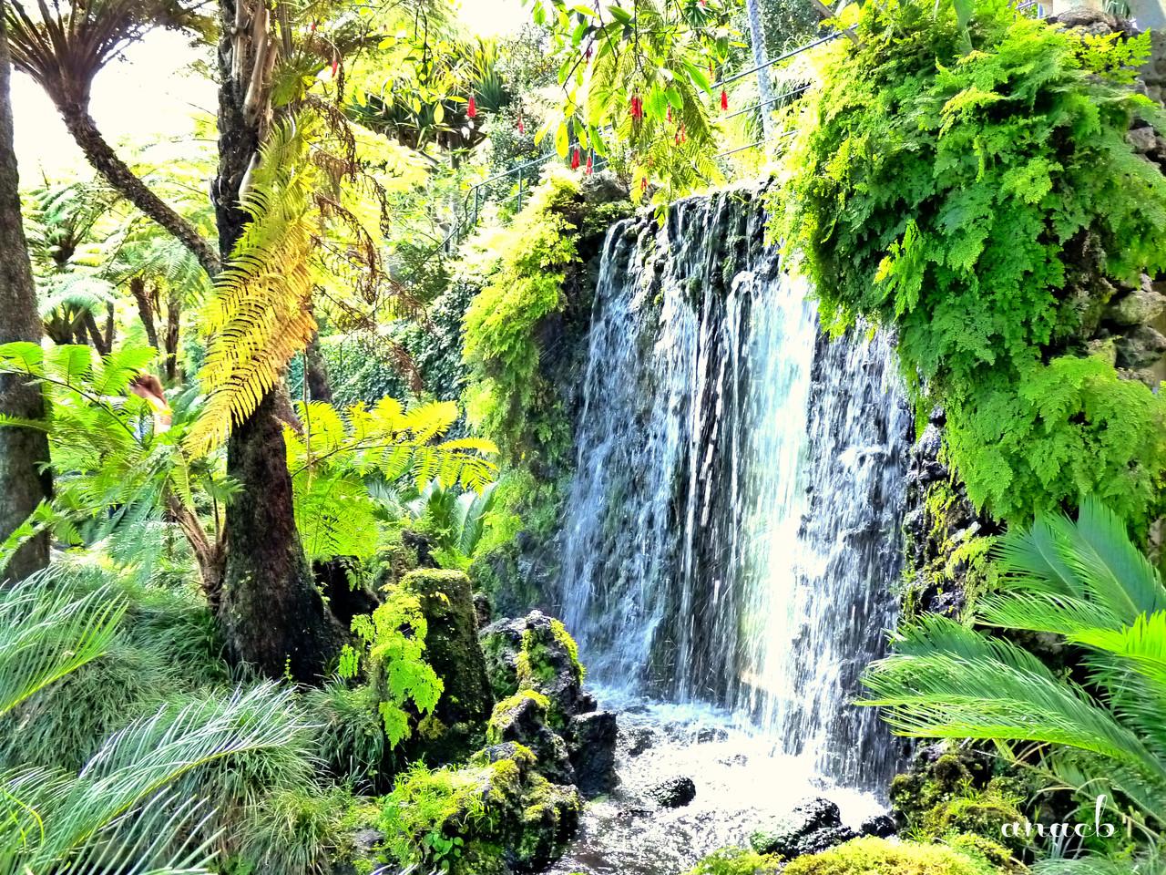 Funchal - Jardins Monte Palace (1225) assin.jpg