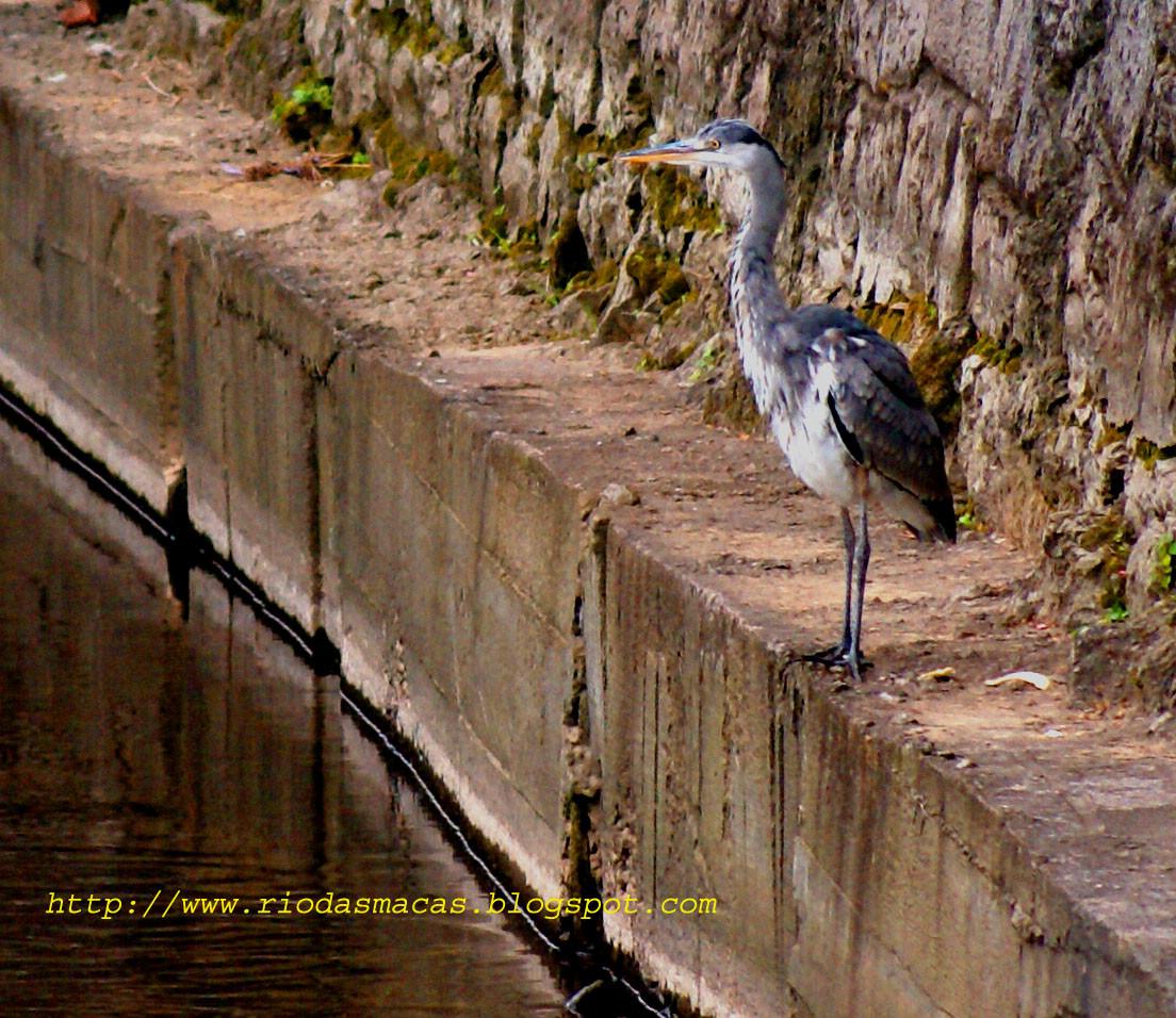 GarçariodasMacas20022015Pblog.jpg