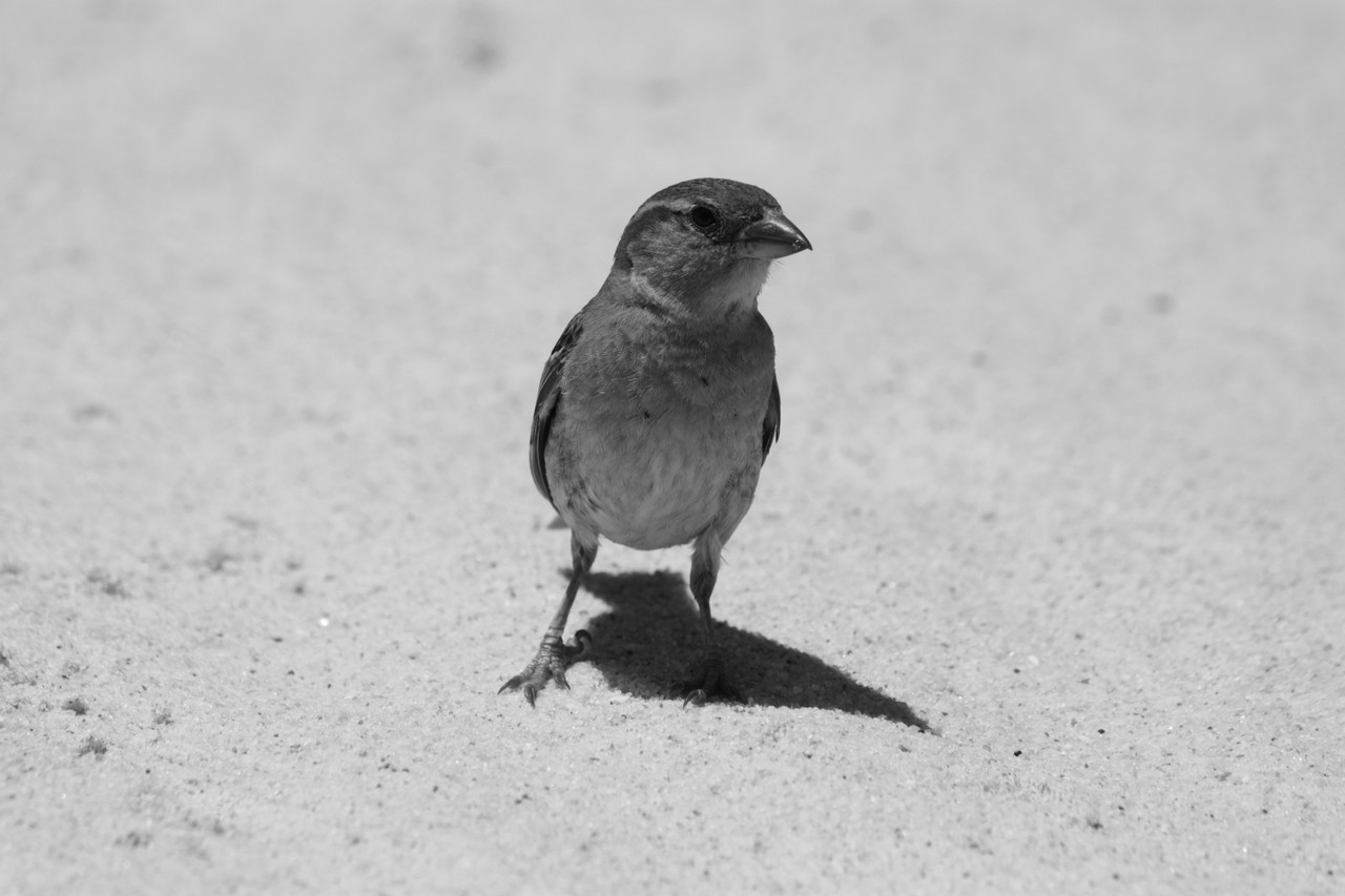 N.º 7300 — Praia do Barril © 2015