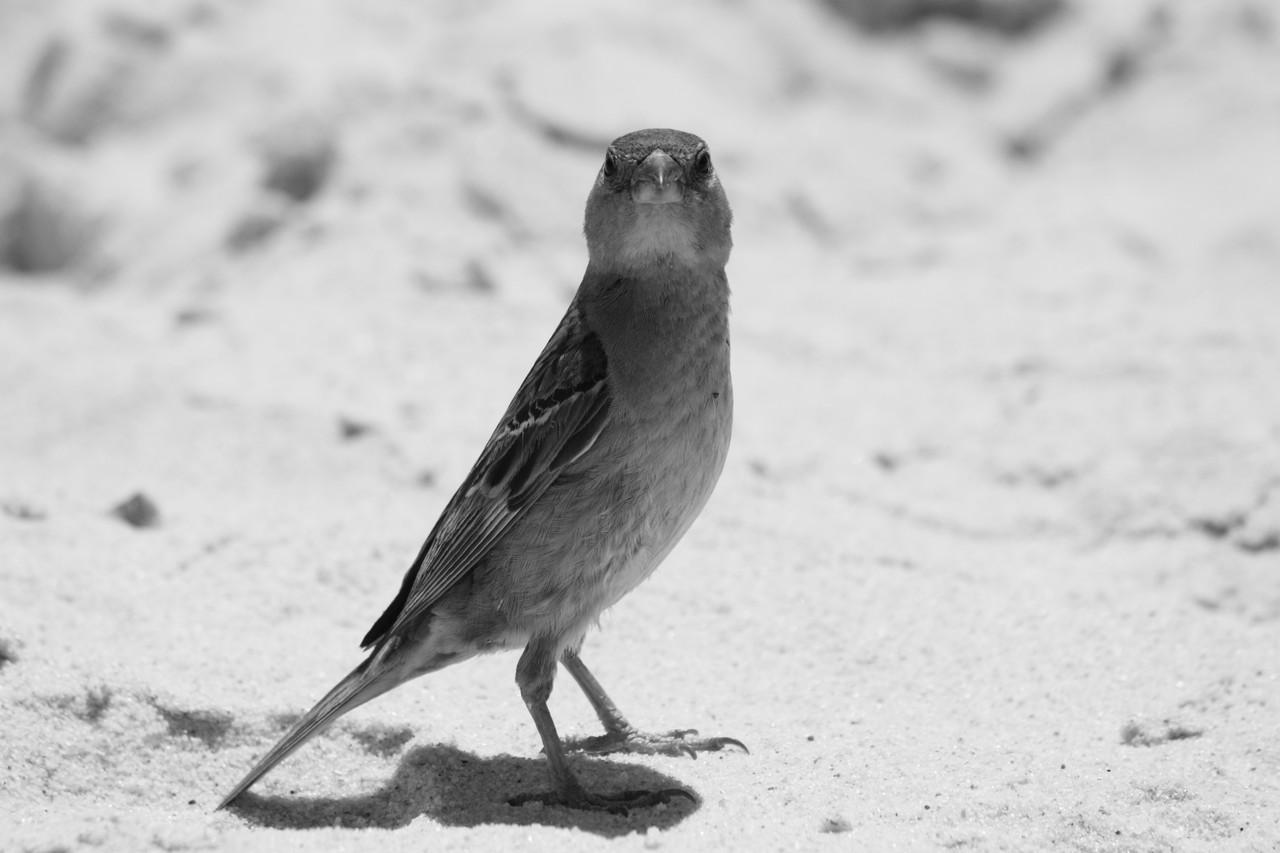 N.º 7303 — Praia do Barril © 2015