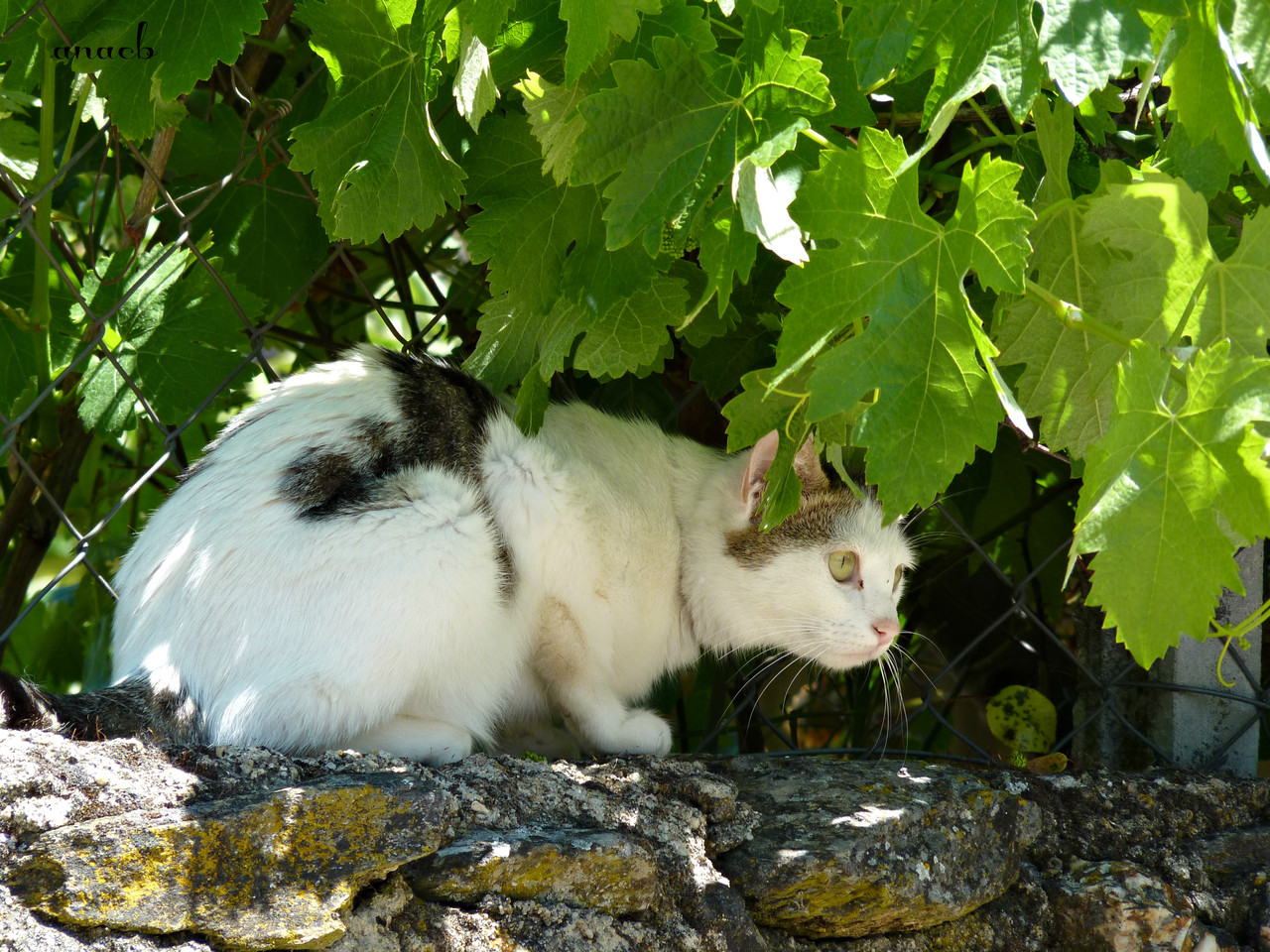 Idanha-a-Velha (113) gato.jpg