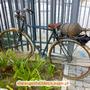 CicloPaper_Carregosa_11.jpg