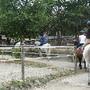 cavalos 11.JPG