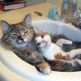cats-in-sink.jpg