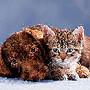 cao-e-gato.jpg