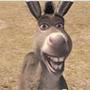 burro_alegre.jpg
