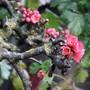 Cores da primavera