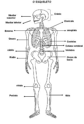 Esqueleto.JPG