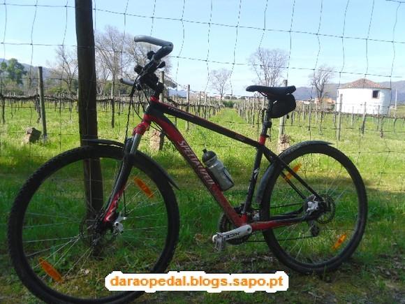 GeoBTT_Ecopista_Ponte_Lima_30