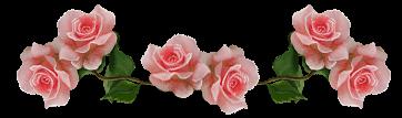 barra_rosas.png