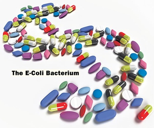 e coli.jpg
