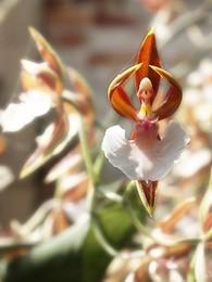 Flores9.jpg