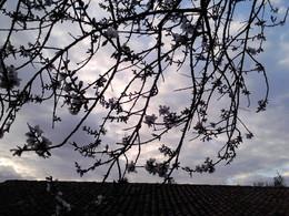 Foto1926. ramo florido . Foto de DAPL jpg