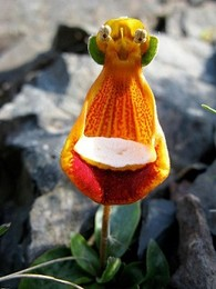 Flores6.jpg