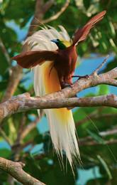 ave do paraíso 2.jpg