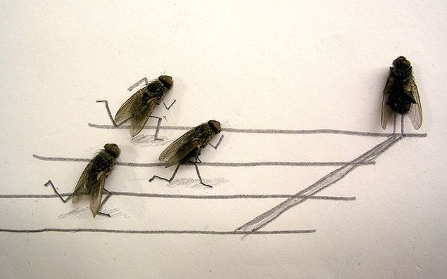 dead_flies_art_01.jpg