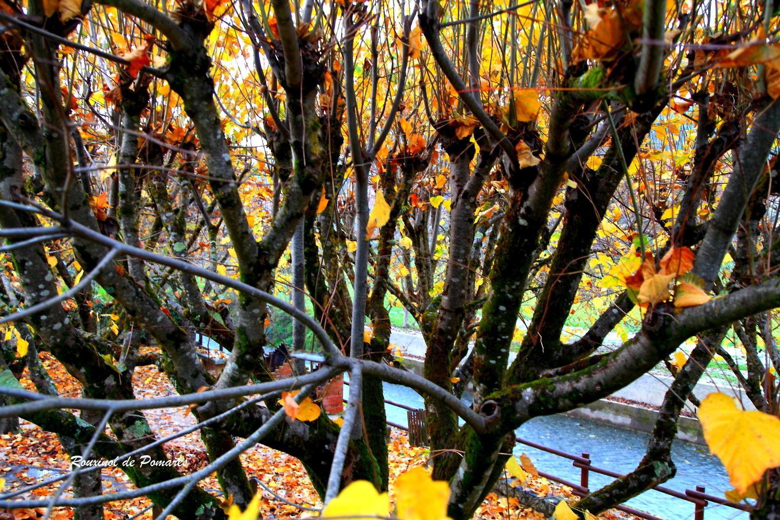 Outono em Pomares I (6)