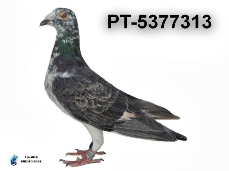 PT-5377313.jpg