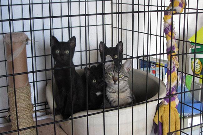 Gatos para adopção.jpg