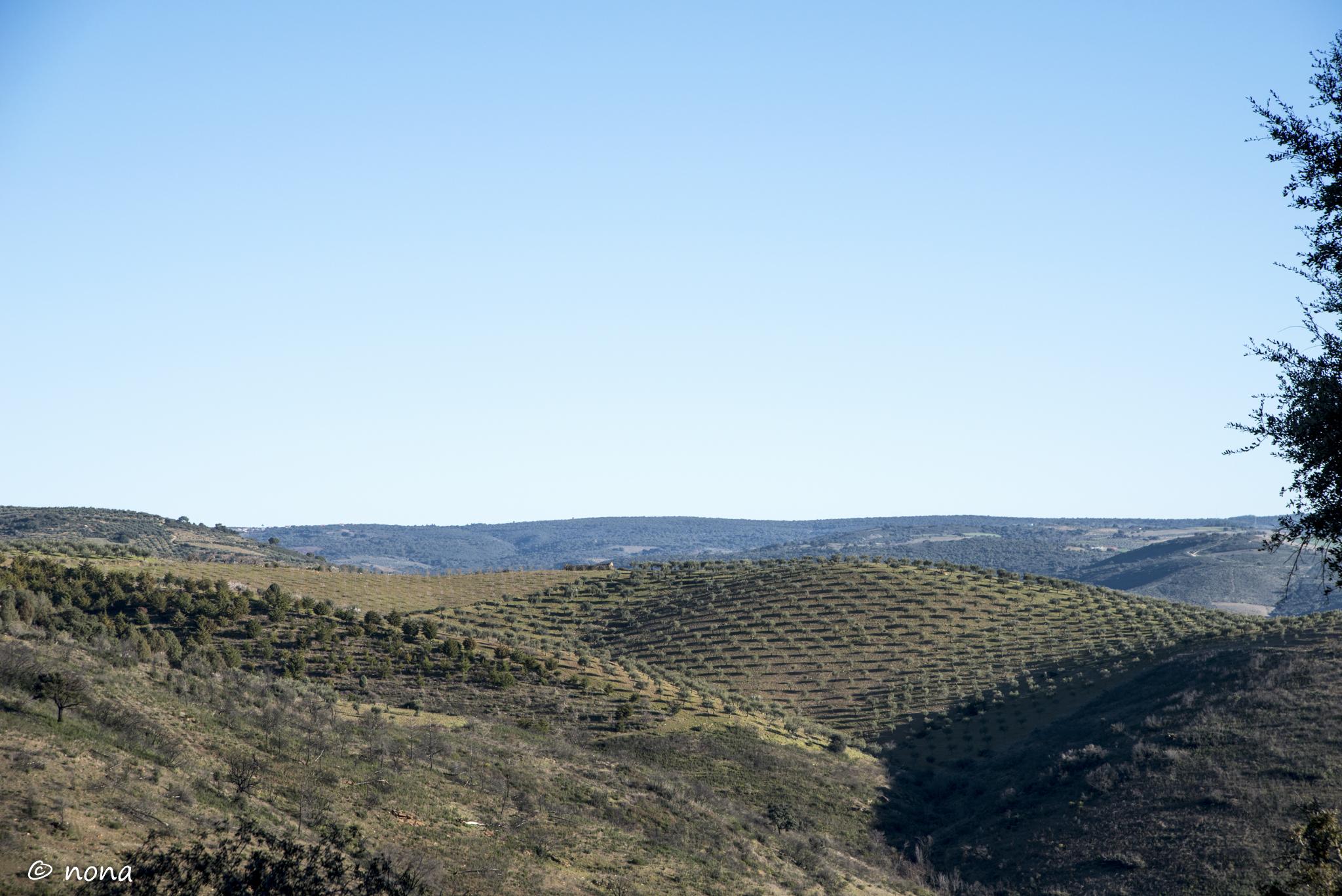 2015 - Rota das Amendoeiras (13).jpg