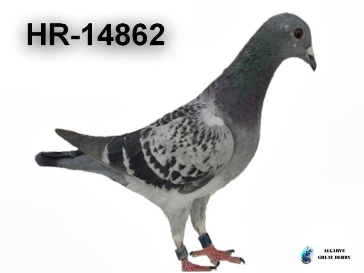 HR-14862.jpg