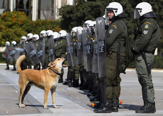 loukanikos-o-cao-rebelde-da-grecia.jpg