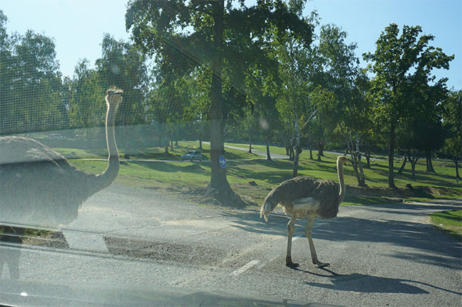 strauss_03_safaripark